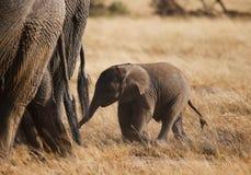 Smallelephant με το mather στο εθνικό πάρκο Amboseli Στοκ εικόνες με δικαίωμα ελεύθερης χρήσης