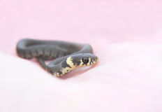 The smallest of snakes Stock Photos