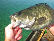 Smallmouth bass. On Grand Traverse Bay Royalty Free Stock Images