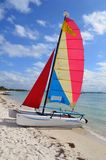 SmallSailing Catamaran Obraz Royalty Free