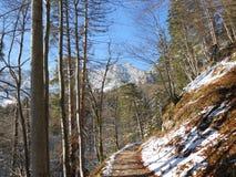 Smalt leda för vandringsled som var stigande in mot snö, täckte bergmaxima, Untersberg, Bayern Royaltyfri Fotografi