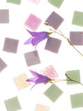 Smalt and lilac bells Stock Photos
