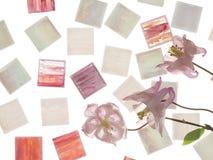 Smalt and Pink Aquilegia Stock Image