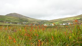 Smaragd Isle-Irland arkivbilder