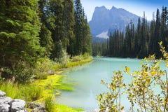 Smaragd sjön Yoho National parkerar Kanada Arkivfoton