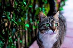 Smaragden synar katten arkivbild