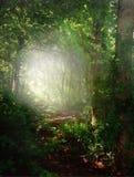 Smaragdgroen bos Stock Fotografie