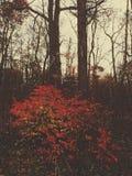 Smaragdgroen bos Stock Foto