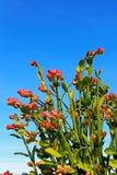 Smaragdgroen-vogelcactus, Pantoffelinstallatie, Dame` s Pantoffel royalty-vrije stock fotografie