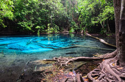 Smaragdgroene blauwe pool in Krabi-provincie, Thailand Royalty-vrije Stock Foto's