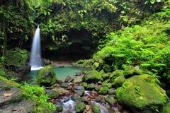 Smaragdgroene Pool, Dominica royalty-vrije stock foto's