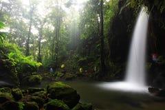 Smaragdgroene Pool, Dominica stock afbeeldingen