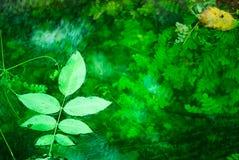 Smaragdlövverk royaltyfria bilder