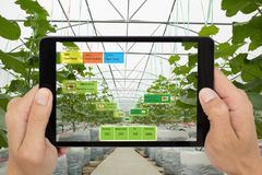 Smart agriculture concept, Agronomist or farmer use Artificial i. Ntelligence and augmented reality in farm to help grow systems, saving water ,resources reduce Stock Photo