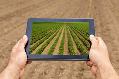 Smart agriculture. Farmer using tablet Soy planting. Modern Agriculture concept. royalty free stock image