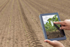 Smart agriculture. Farmer using tablet Soy planting. Modern Agri Stock Photography