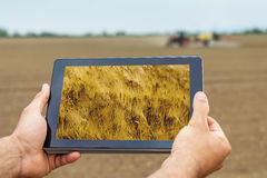 Smart agriculture. Farmer using tablet Wheat planting. Modern Ag Royalty Free Stock Image