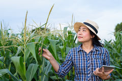 Smart Asian woman farmer in corn field. With digital tablet - agriculture farming small business owner concept Royalty Free Stock Photos