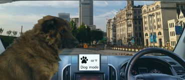 Smart autonomous car use dog and sentry mode to protect or guard the car and pet In addition to keeping the climate control on, th. E touchscreen will display royalty free stock image