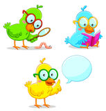 Smart birds Stock Photos