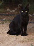 Smart black cat Royalty Free Stock Photography