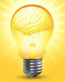 Smart brain. Vector: smart brain, light bubble Stock Image