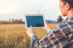Smart bruka jordbruks- teknologi och organisk åkerbruk kvinna som använder forskningminnestavlan och studerar utvecklingen av ris royaltyfri fotografi