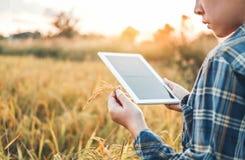 Smart bruka jordbruks- teknologi och organisk åkerbruk kvinna som använder forskningminnestavlan och studerar utvecklingen av ris arkivbilder