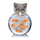 Smart cat fish concept Stock Photography