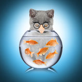 Smart cat fish concept Royalty Free Stock Photography