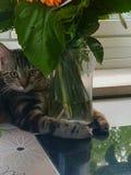 Smart cat royalty free stock photos