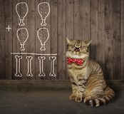 Cat in glasses near a fence royalty free stock photos