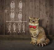 Cat in glasses near a fence 2 royalty free stock image