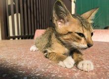 Smart cat stock images