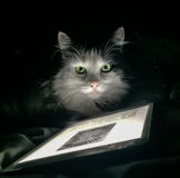 Cat with tablet. Black and white cat illuminated by iPad or tablet interface Stock Images