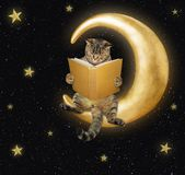 Cat reads a book on the moon stock photo
