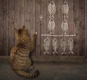 Cat writes a math equation on a fence 2 royalty free stock photos
