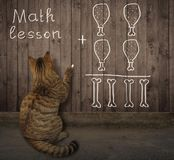 Cat writes a math equation on a fence stock photography