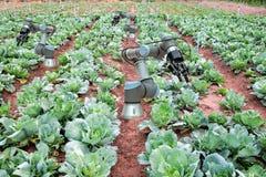 Smart che coltiva 4 0 ed industria 4 0, idea di concetto dell'innovazione Fotografie Stock Libere da Diritti