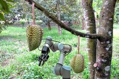 Smart che coltiva 4 0 ed industria 4 0, idea di concetto dell'innovazione Fotografia Stock Libera da Diritti