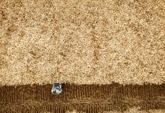 Smart che coltiva facendo uso delle tecnologie moderne nell'agricoltura fotografia stock