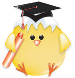 Smart chick Stock Image
