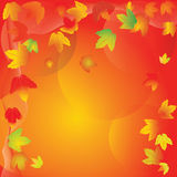 Smart circulation of autumn maple leaves Stock Photo