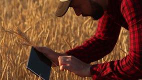 Smart cultivant utilisant des technologies modernes dans l'agriculture L'agriculteur d'agronome tient l'affichage de tablette num clips vidéos