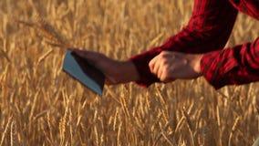 Smart, das unter Verwendung der modernen Technologien in der Landwirtschaft bewirtschaftet Agronomenlandwirt hält digitale Notent stock video