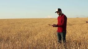 Smart die gebruikend moderne technologieën in landbouw bewerken De agronoomlandbouwer houdt en raakt digitale tabletcomputer stock video