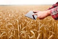 Smart die gebruikend moderne technologieën in landbouw bewerken De landbouwer van de mensenagronoom raakt en jat app op digitaal Stock Foto