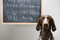 Smart dog Stock Photos