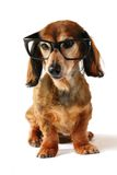 Smart dog. Stock Photos