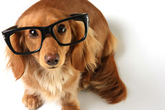 Smart dog Stock Photo
